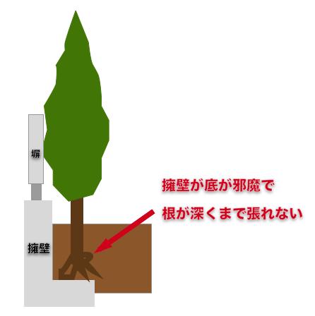 L字擁壁と庭木