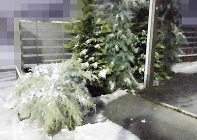 倒れた庭木
